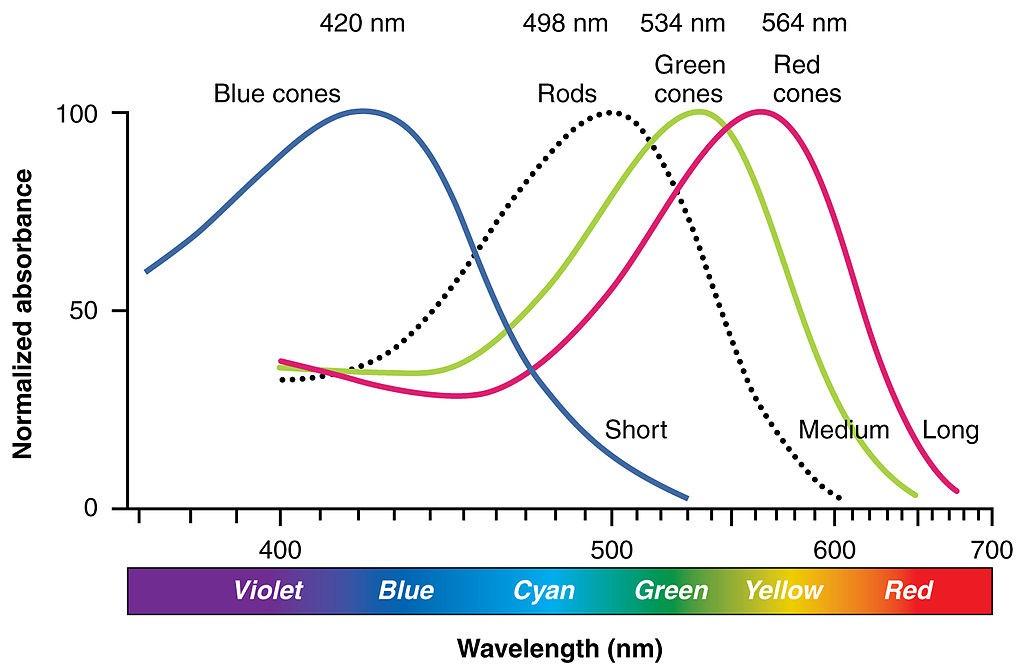 Respuesta frecuencial de los conos